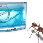 Hormiguero Ant World con gel transparente