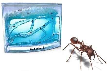 Colonia de hormigas Ant World
