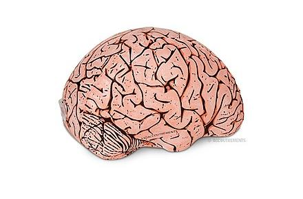 Cerebro Hinchable de Emergencia