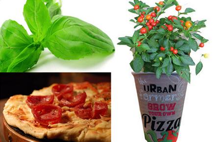 Macetas para cultivar tu propia pizza