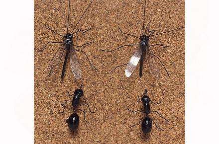 Chinchetas en forma de insectos