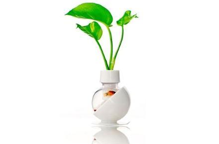 Capsule plant
