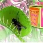 Regalos-frikis-planta-caza-moscas