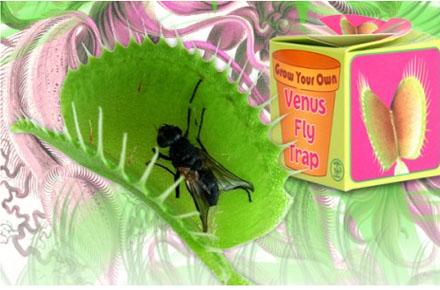 Planta caza moscas