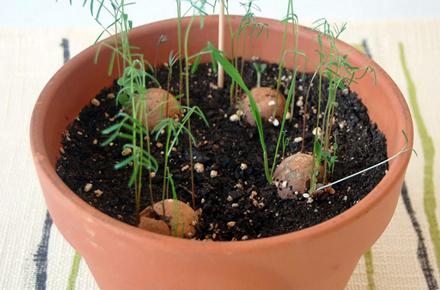Greenbomba: plantas aromáticas que germinan solas