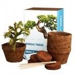 Kit de cultivo para bonsáis