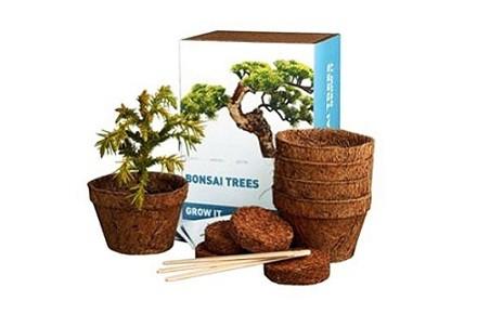 Kit de cultivo para bonsais